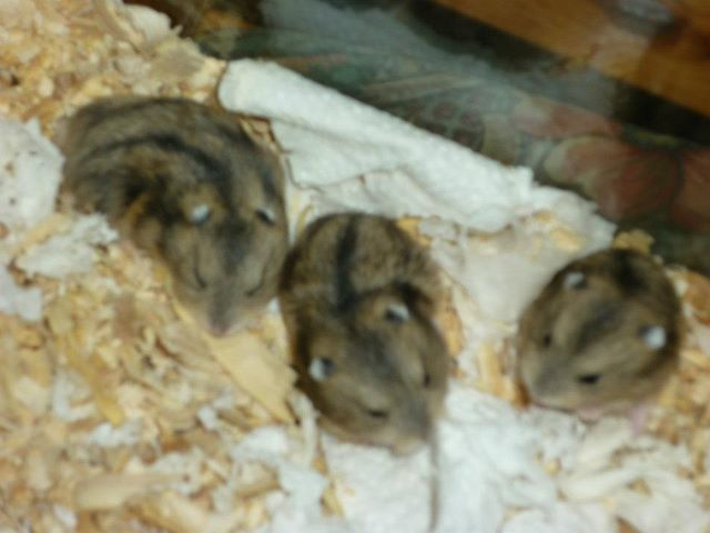 Click image for larger version.  Name:Hammies!.jpg Views:30 Size:35.3 KB ID:136642
