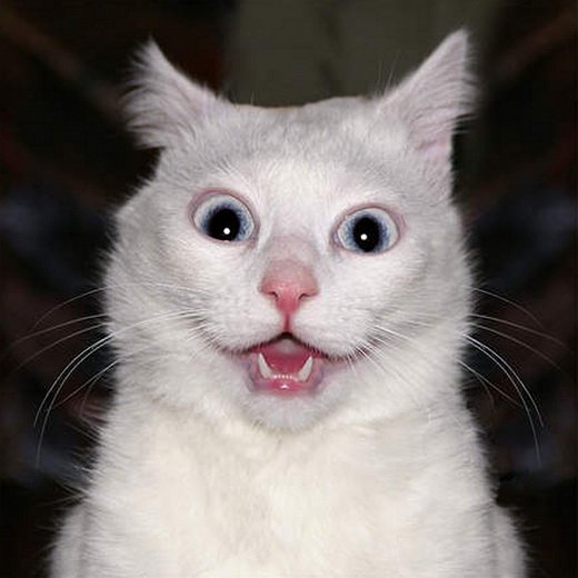Name:  shocked-white-cat.jpg