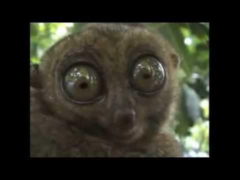 Name:  dramatic lemur.jpg Views: 63 Size:  9.7 KB