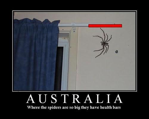 Name:  cwglt081220-aussie-spider.jpg Views: 47 Size:  21.2 KB
