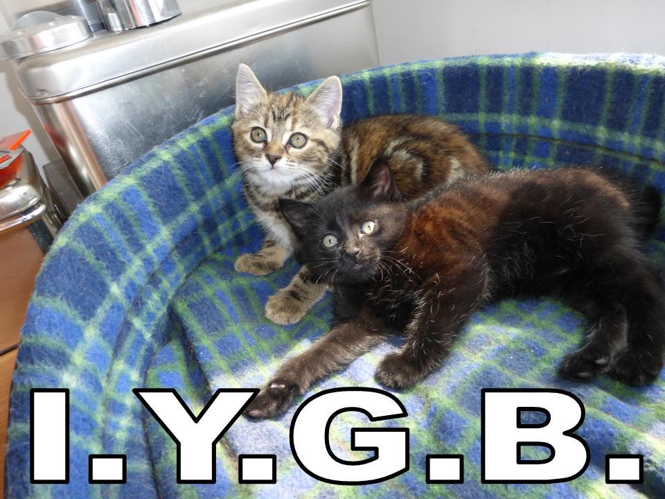 Name:  _IYGB 9.jpg Views: 221 Size:  111.8 KB
