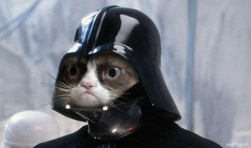 Name:  Grumpy-Cat-Internet-Meme-Invades-Star-Wars.jpg Views: 60 Size:  23.0 KB