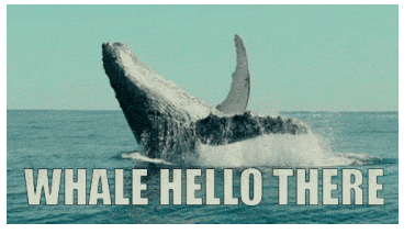 Name:  whale.png Views: 5 Size:  42.5 KB