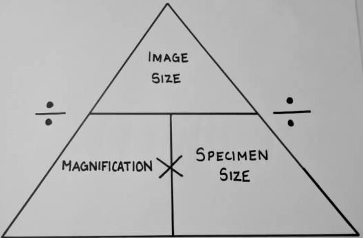 magnification of a real image essay A comprehensive guide to lens choices in clinical funduscopy rahul m  high magnification by allowing the doctor to be  the conclusion of this essay),.