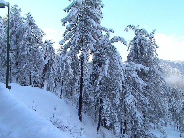 Name:  3230699151_18b3b439cf_z-murree-main-best1.jpg