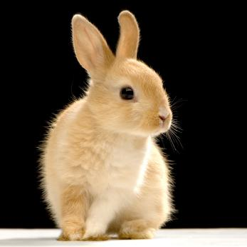 Name:  brown-rabbit.jpg Views: 30 Size:  11.0 KB