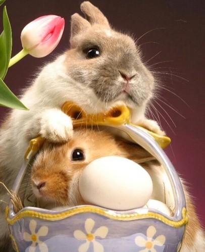 Name:  animal,animalz,rabbit,adorable,adorable,animals,animal,lovers-fcb657f3075e243127c8d6b8e271454b_h.jpg Views: 62 Size:  50.8 KB