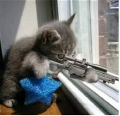 Name:  cat-tax-cat-with-gun-looking-out-window-760030.jpg