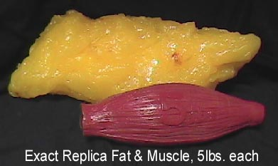 Name:  fat-v-muscle.jpg Views: 70 Size:  16.4 KB