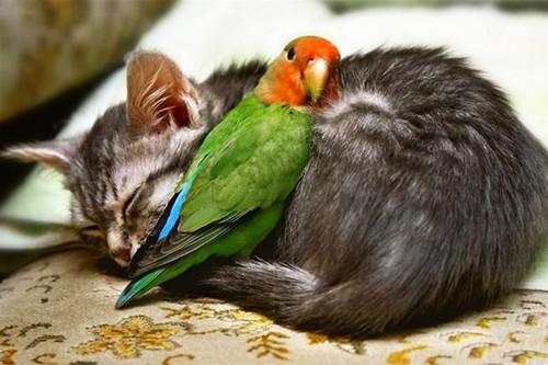 Name:  animal,cute,pretty,cute,pets,love,d,_,b-bfaa427e0efe3de864e63130c3f40e12_h.jpg Views: 50 Size:  58.5 KB