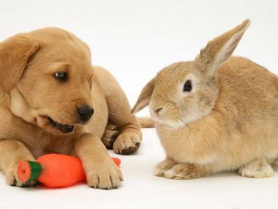 Name:  dogandrabbit4.jpg