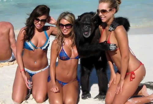Name:  monkey-playa.jpg
