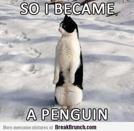 Name:  so-i-became-a-penguin-funny-picture.jpg Views: 32 Size:  36.3 KB