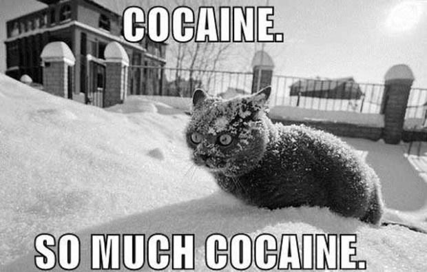 Name:  coke_cat_freak.jpg Views: 357 Size:  61.9 KB