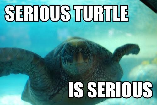 Name:  serious_turtle.jpg Views: 202 Size:  27.0 KB
