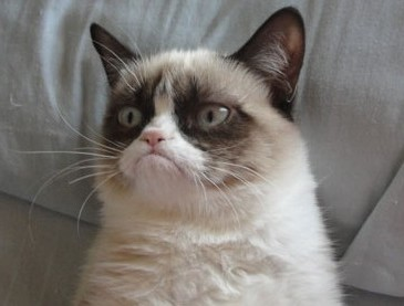 Name:  Grumpy-Cat.jpg