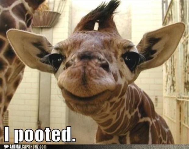 Name:  giraffe pooted.jpg Views: 137 Size:  39.8 KB