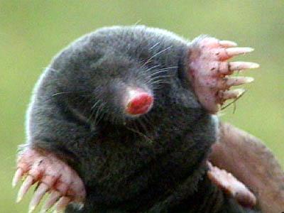 Name:  mole1245.jpg Views: 450 Size:  20.3 KB