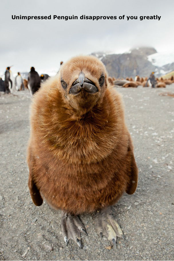 Name:  Unimpressed+Penguin+.jpg Views: 89 Size:  113.1 KB