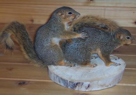 Name:  Funny-Taxidermy-Squirrels.jpg Views: 103 Size:  22.3 KB