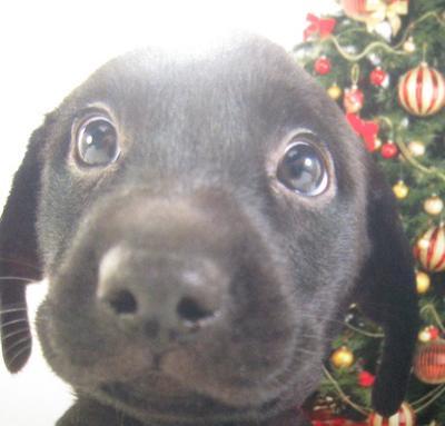 Name:  puppy_eyes.dcnq5zkw3a0ccwswg4gk0cocs.6ftqw7o5s40808swwgwo00kwo.th.jpeg Views: 33 Size:  18.9 KB