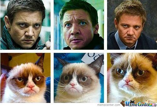 Name:  jeremy-renner-is-grumpy-cat_o_958601.jpg