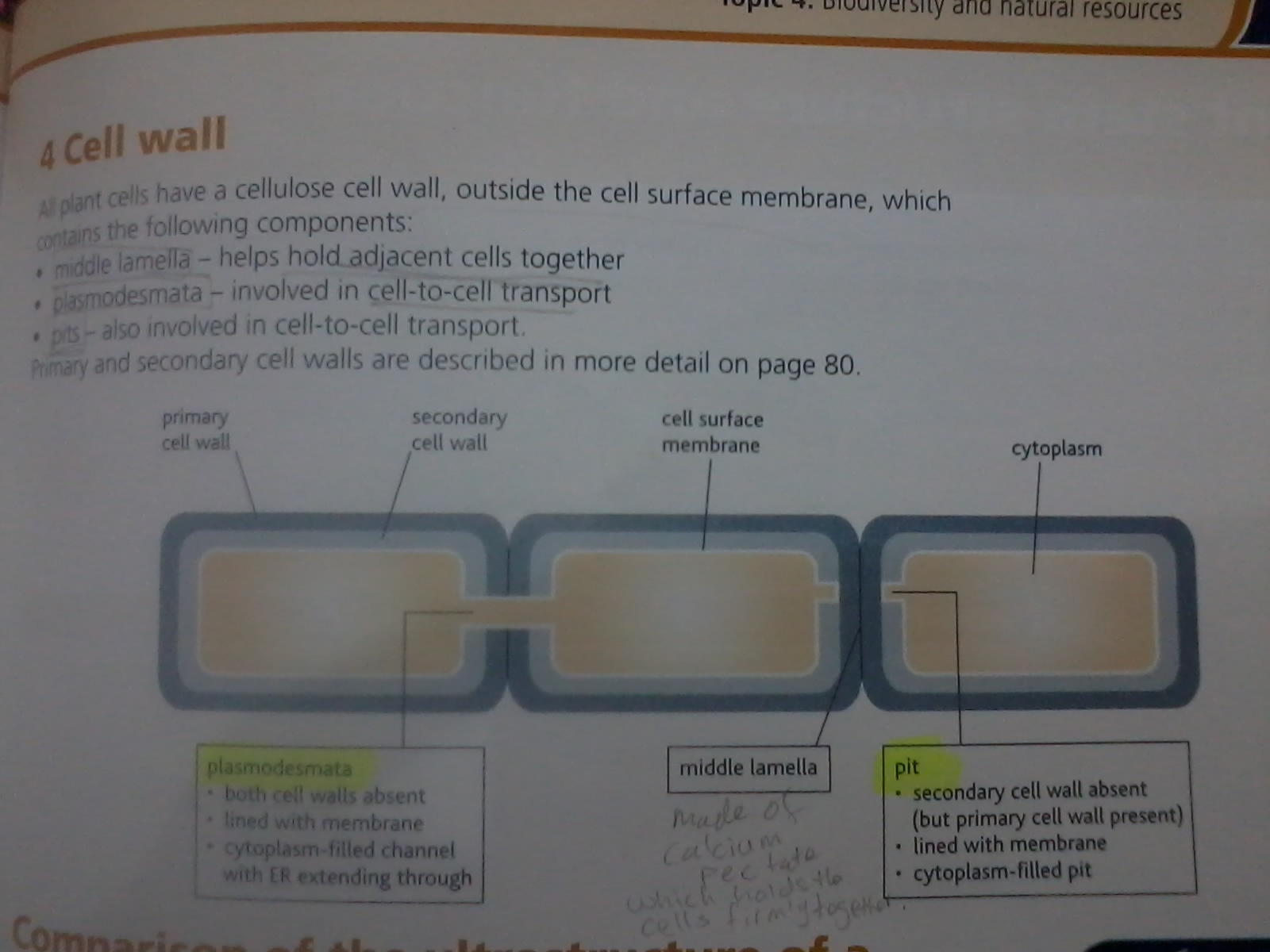 Name:  Cell wall.jpg