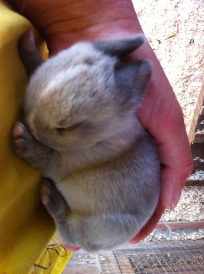 Name:  rabbit 1.jpg Views: 50 Size:  62.8 KB
