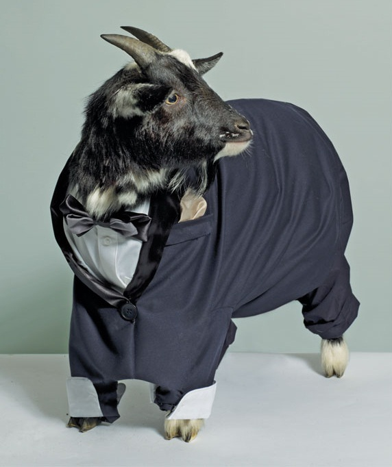 Name:  GOAT-IN-A-SUIT-1-1306959118.jpg Views: 115 Size:  78.6 KB