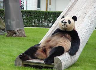 Name:  Funny-Panda-01.jpg Views: 1571 Size:  27.5 KB