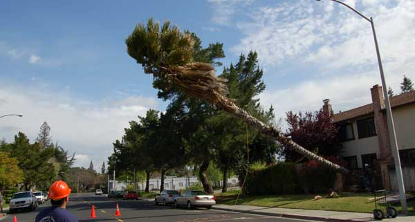 Name:  tree-falling.jpg Views: 64 Size:  24.1 KB