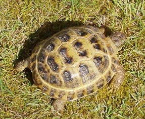 Name:  Torty the tortoise.png Views: 84 Size:  163.8 KB