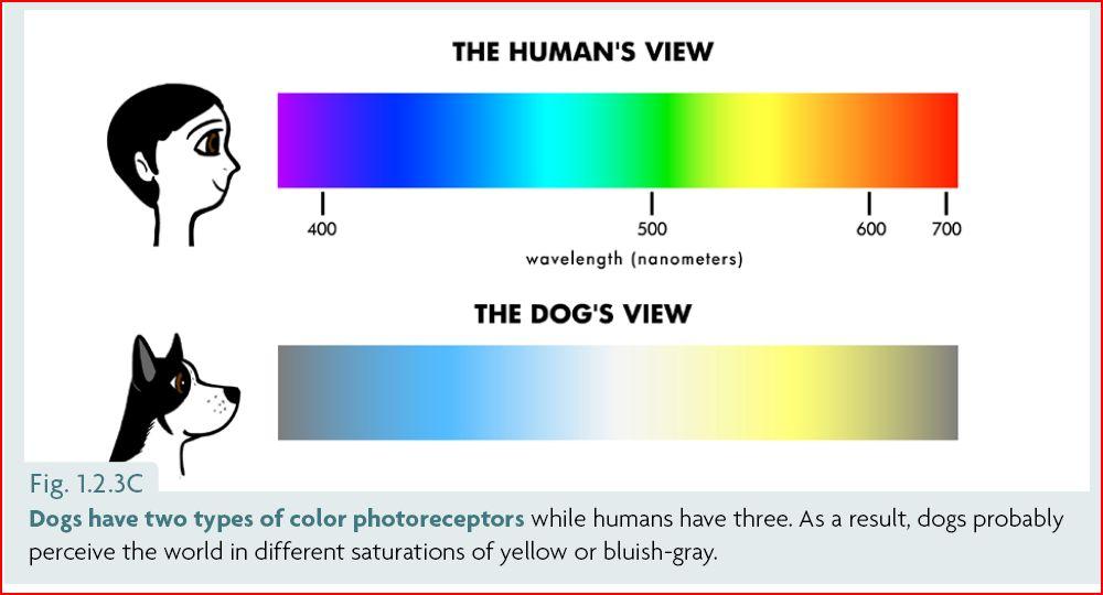 Farbensehen Hund
