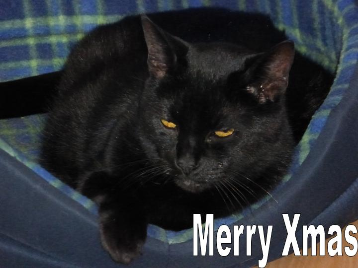 Name:  merry Xmas.jpg Views: 100 Size:  42.1 KB