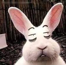 Name:  rabbit straight face.jpg Views: 36 Size:  9.1 KB