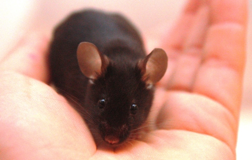 Name:  cute mouse.jpg Views: 78 Size:  79.7 KB