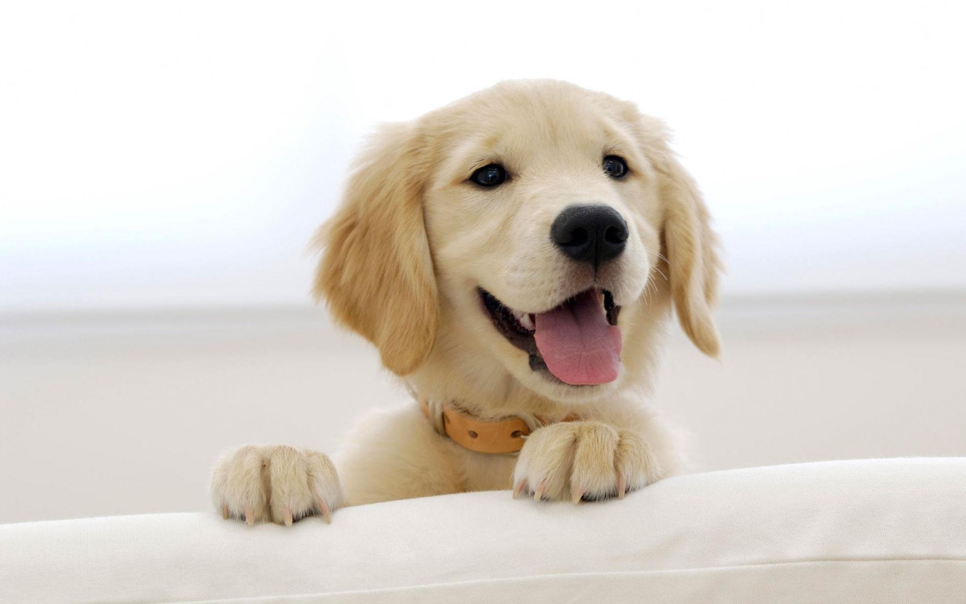 Name:  dog-field-wallpaper-hd-44811-2560x1600-px.jpg Views: 159 Size:  403.3 KB