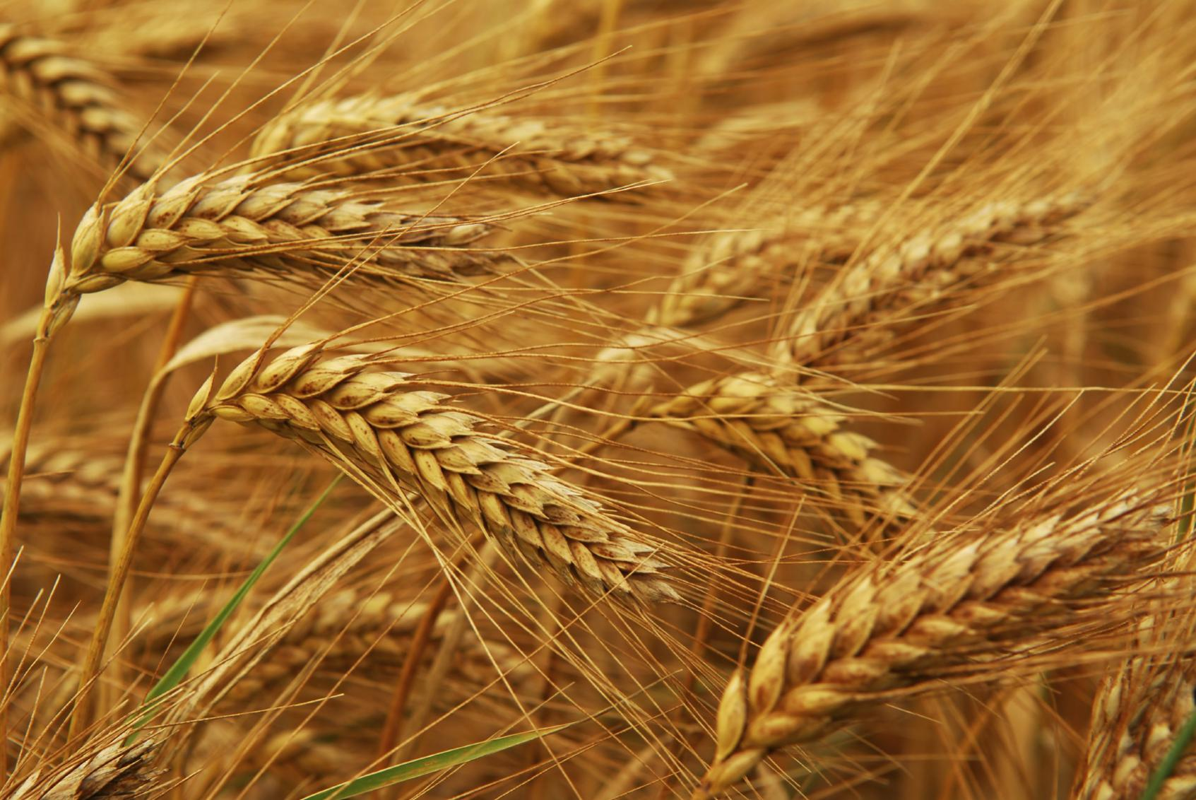 Name:  grain.jpg Views: 89 Size:  241.3 KB