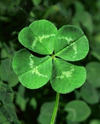 Name:  four-leaf-clover.jpg Views: 6704 Size:  83.9 KB