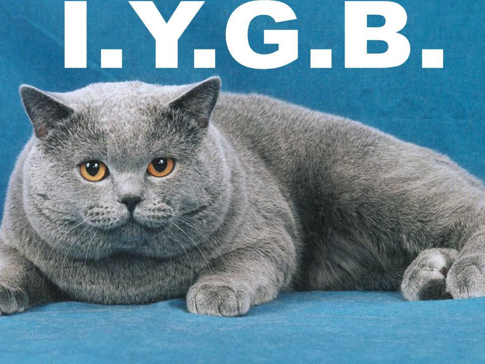 Name:  _IYGB 14.jpg Views: 120 Size:  120.7 KB