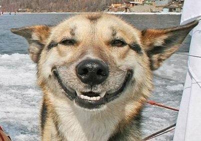 Name:  dog.jpg Views: 449 Size:  30.7 KB