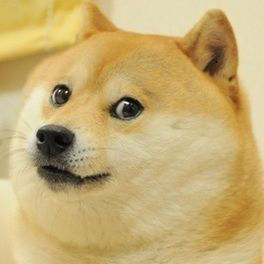 Name:  15 Pics Best of the Doge meme_ wow such funny so doge.jpg Views: 90 Size:  11.1 KB