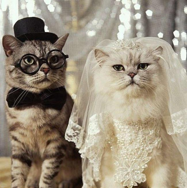 Name:  Cats-In-Wedding-Clothes.jpg Views: 303 Size:  63.2 KB