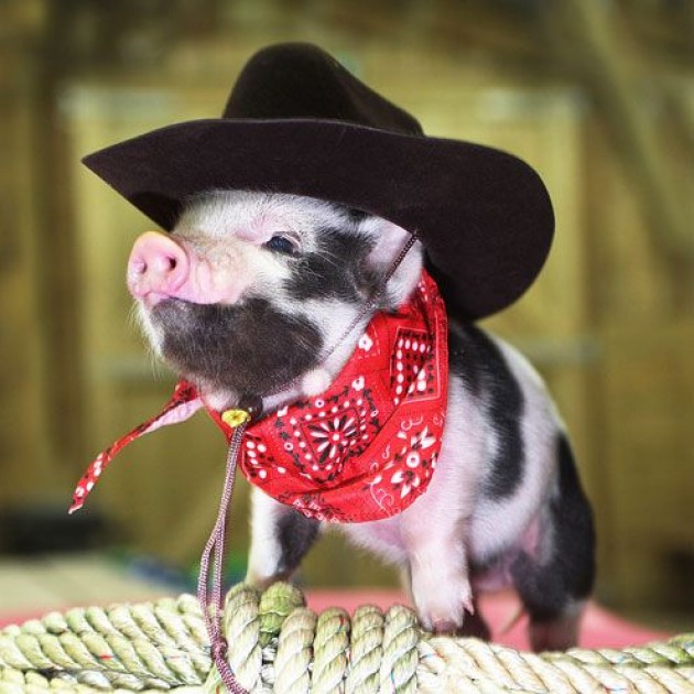 Name:  cowboy pig.jpg