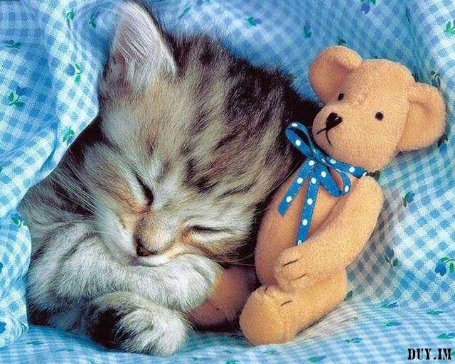 Name:  cute cats wallpaper012.jpg Views: 69 Size:  123.5 KB