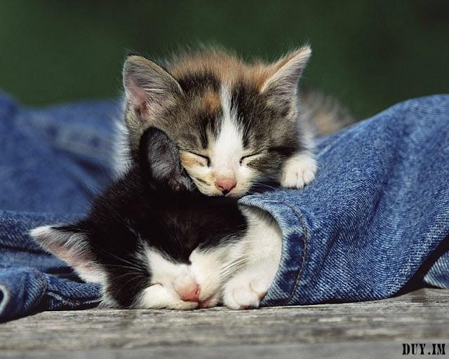 Name:  cute cats wallpaper028.jpg Views: 25 Size:  92.2 KB