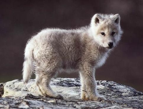 Name:  wolf.jpg Views: 131 Size:  116.2 KB
