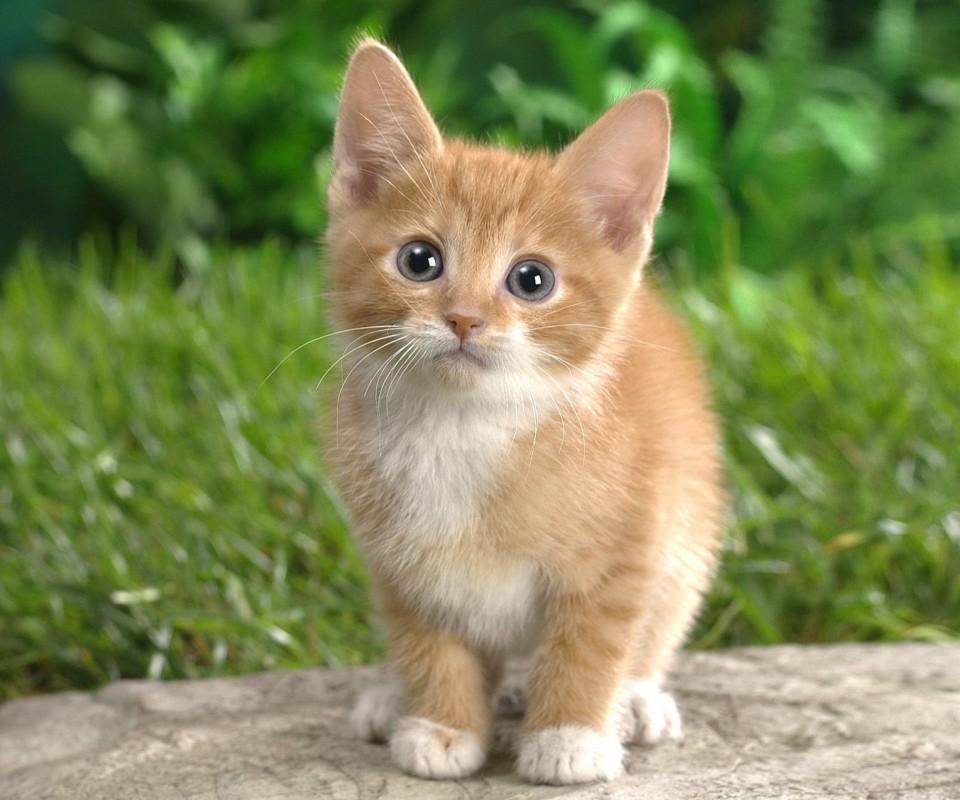 Name:  kitten-2.jpg Views: 137 Size:  142.5 KB