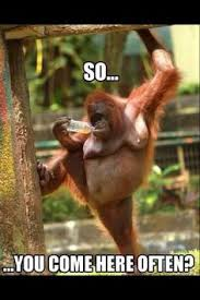 Name:  monkey.jpg Views: 36 Size:  9.1 KB