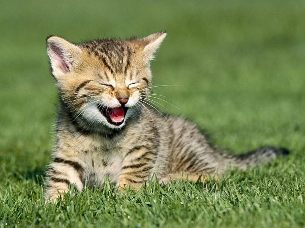 Name:  Cat (42).jpg Views: 30 Size:  121.3 KB